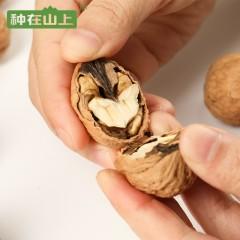 云南丑核桃500g/袋 薄壳纸皮壳原味临沧坚果种在山上